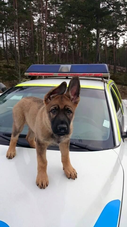 krav för att bli polis